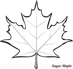 236x223 Learn How To Draw A Leaf, One Of The Maple Variety