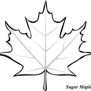 300x300 Maple Leaves Coloring Sheets Leaf Page