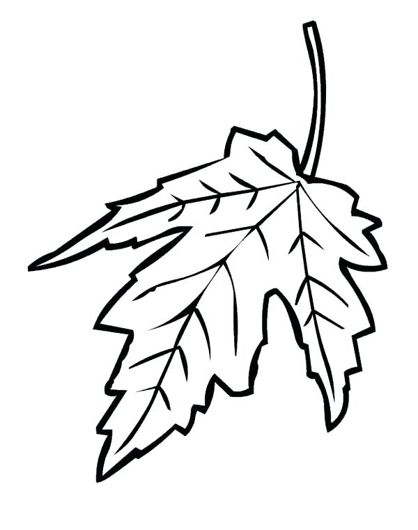 600x761 Maple Tree Coloring Page Maple Leaf Coloring Pages Maple Leaf