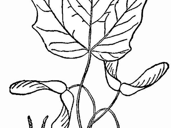 600x450 Sagebud Grow Your Garden Plant A Tree Pot A Flower Sow A Seed