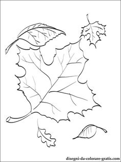 236x316 Sugar Maple Leaf Sketch Maple Leaves Coloring Pages. To Use