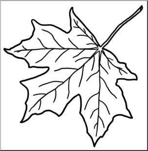 304x312 Clip Art Leaf Sugar Maple Bampw I Abcteach