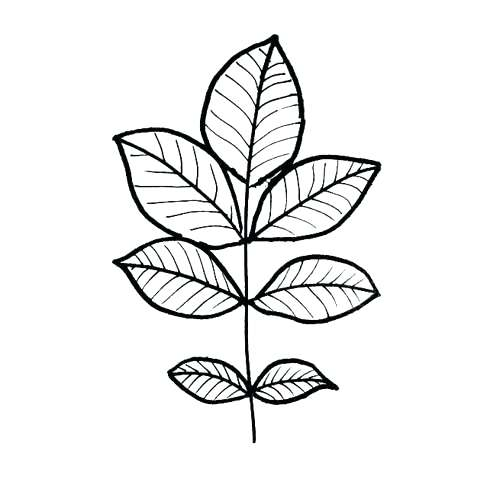500x500 Leaf Color Page Synthesis.site