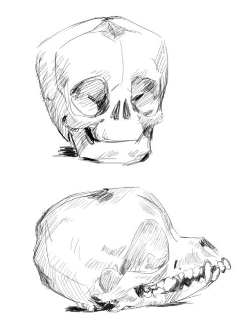 500x646 Chihuahua Skull Tumblr