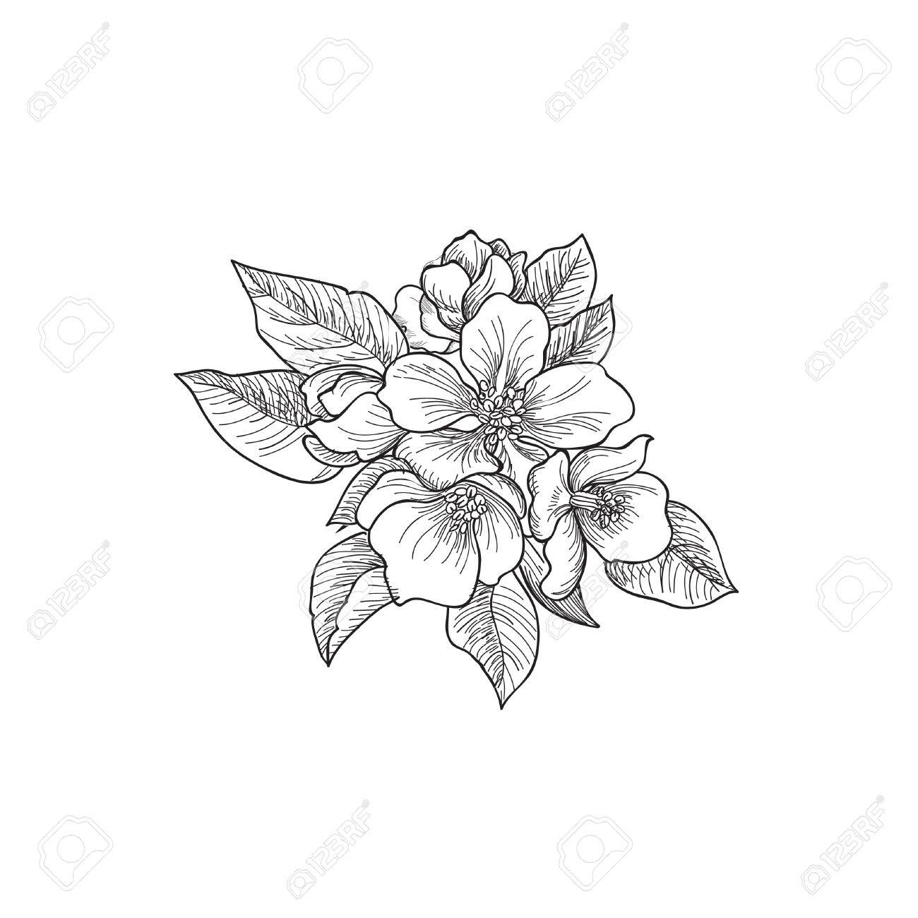 1300x1300 Floral Background. Greeting Card With Flower. Flourish Border