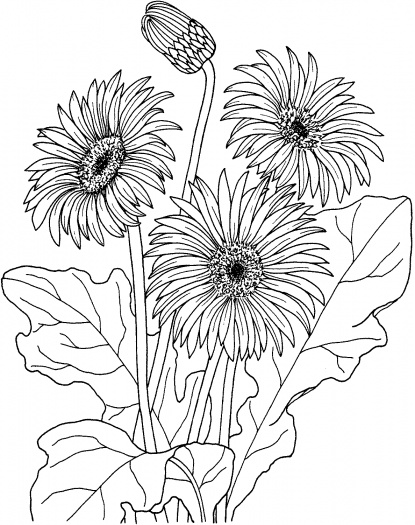 415x525 Summer Flower Coloring Pages Tulip Flower Coloring Pages