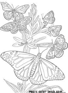 218x300 Butterfly Summer Flower Coloring Pages Online Free Girl