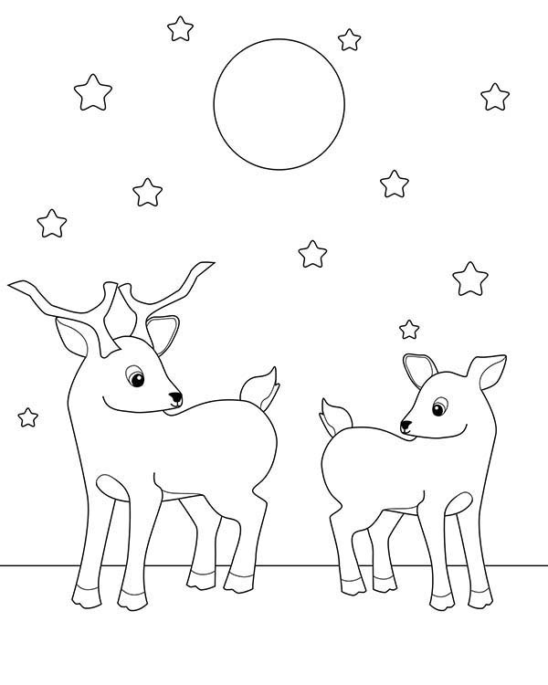 600x750 Two Deer Fawn Under Starry Sky Coloring Page Coloring Sun