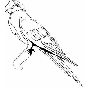 300x300 Proud Conure On Branch Coloring Page