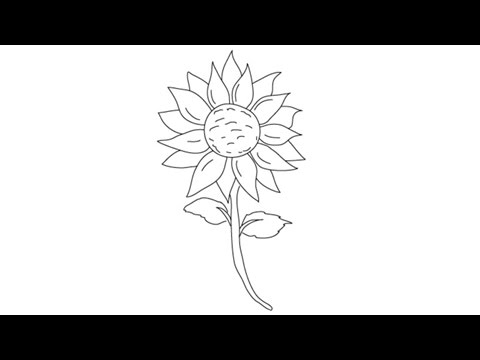 480x360 How To Draw A Sunflower