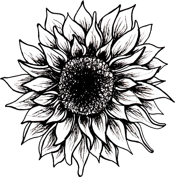 616x621 black and white sunflower stickers by juliahealyy redbubble