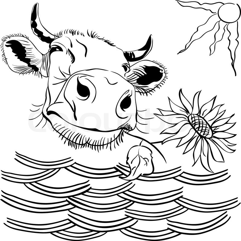 799x800 Black And White Image Funny Cow Peering Over Wattle And Chewing