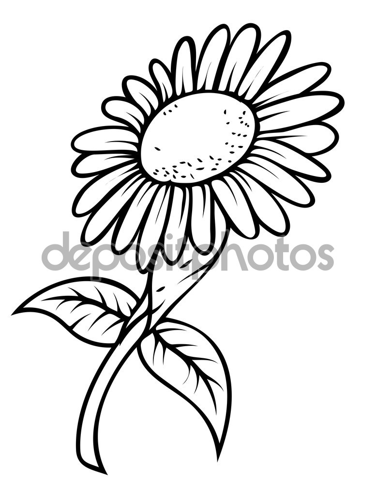 777x1023 Sunflower Drawings Clipart