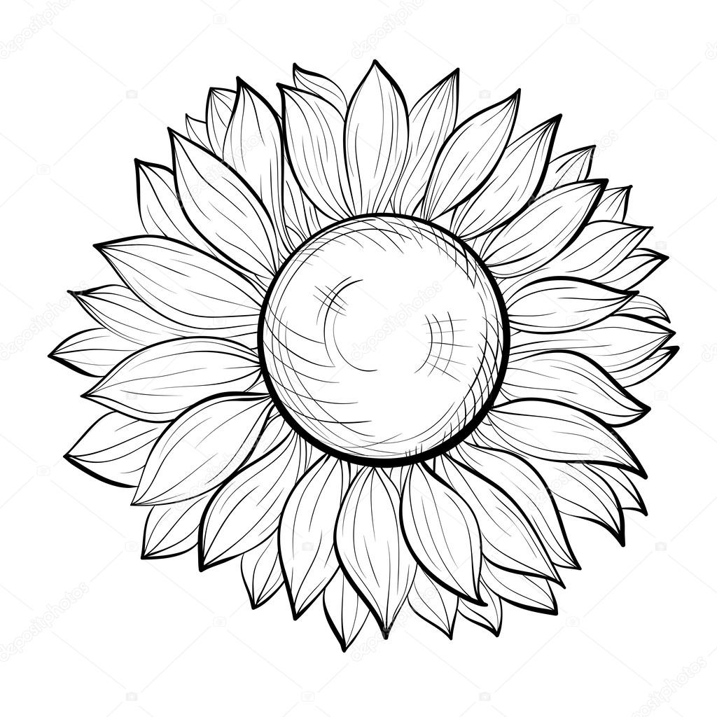 1024x1024 Beautiful Black And White Sunflower Isolated On White Background