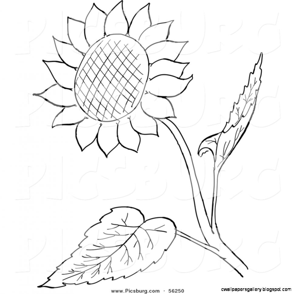 972x970 Black And White Sunflower Clipart Wallpapers Gallery