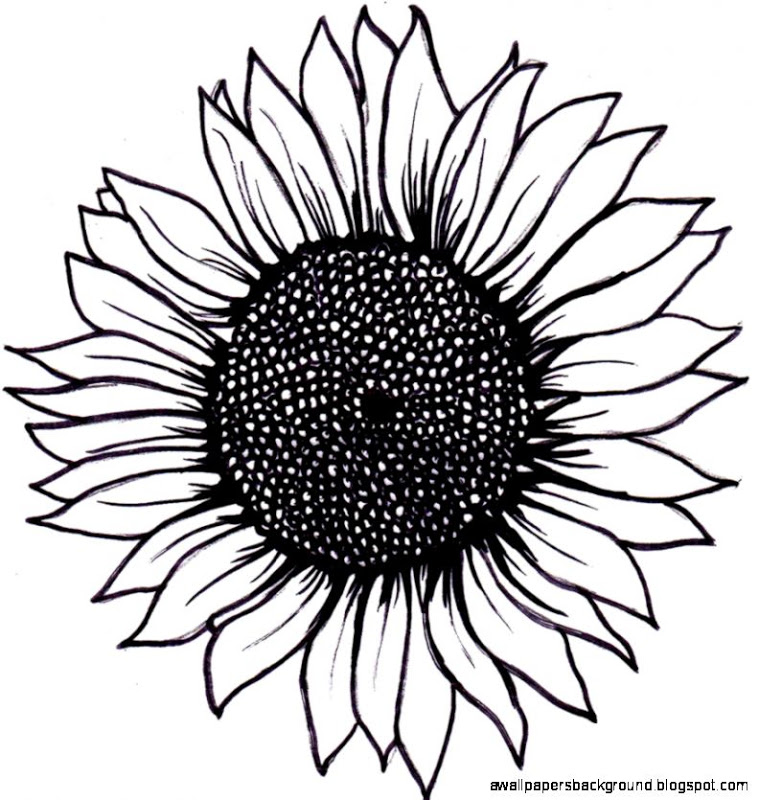 759x800 Black And White Sunflower Drawing Wallpapers Background