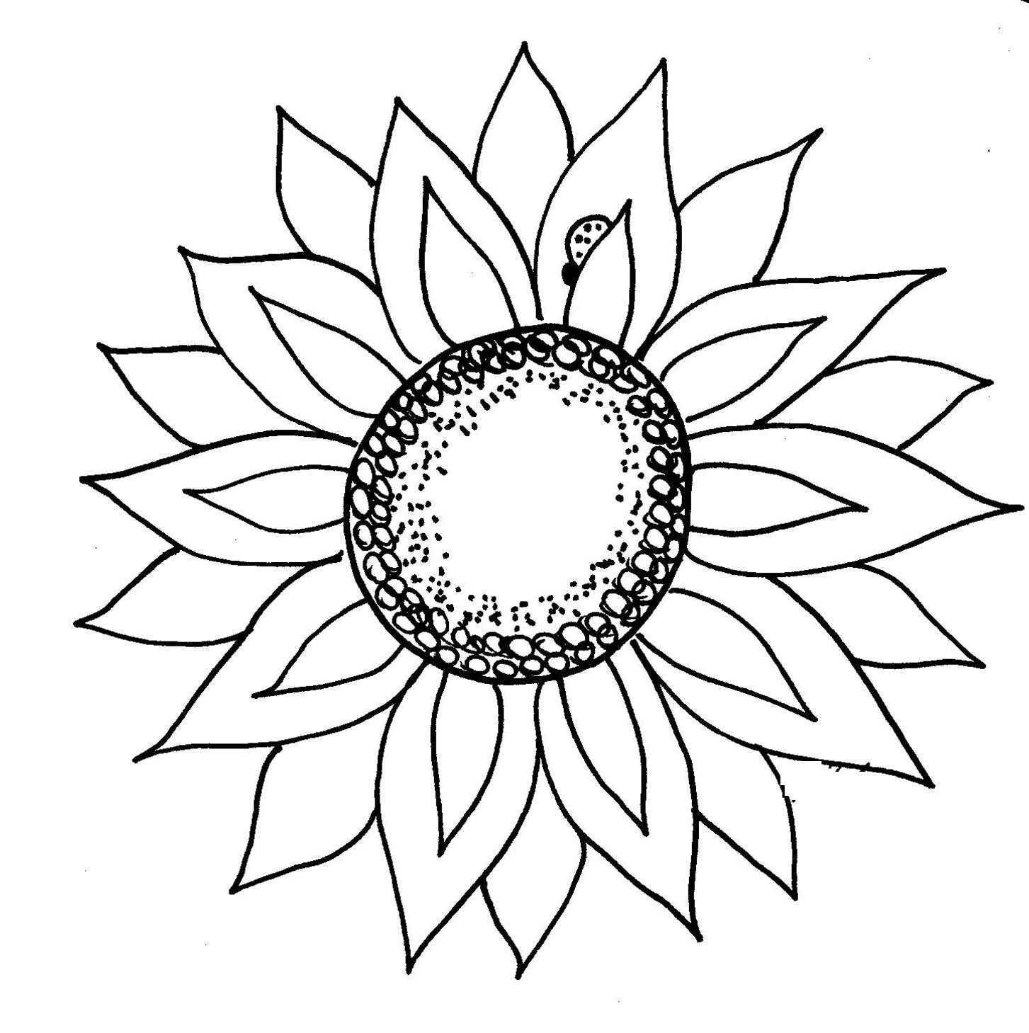 1453x1459 Black White Sunflower Drawing Sunflower Clipart Black