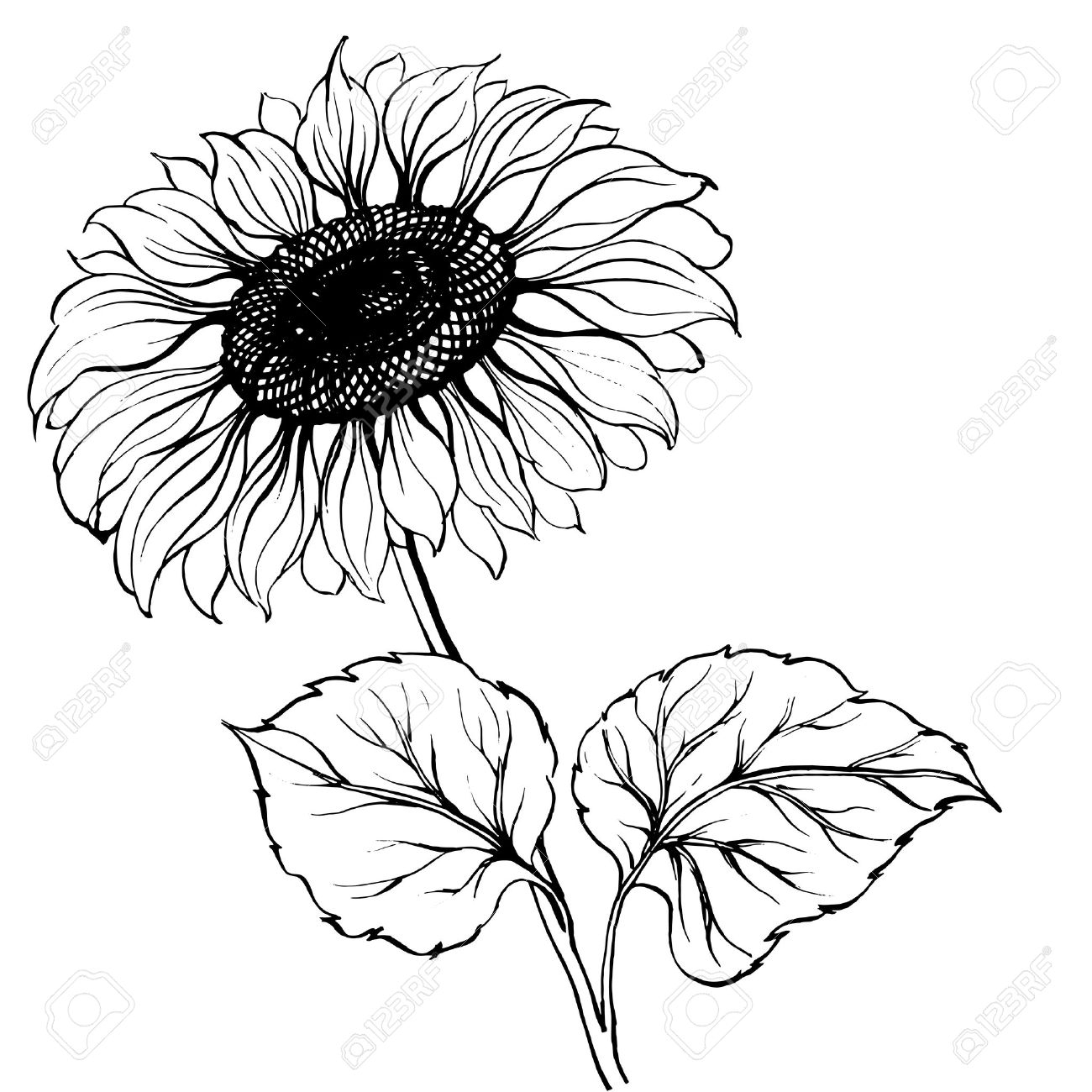1300x1300 Black And White Sunflower Drawing The Best Sunflower Drawing