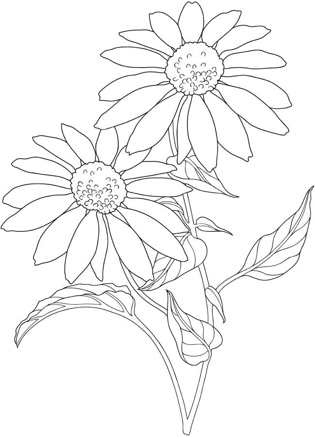 Sunflower Cartoon Drawing