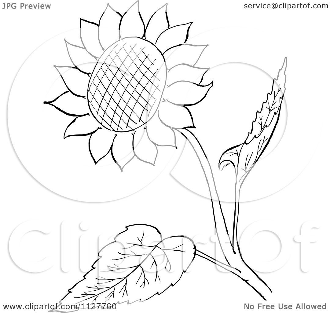 1080x1024 Cartoon Of A Retro Vintage Black And White Sunflower And Leaves
