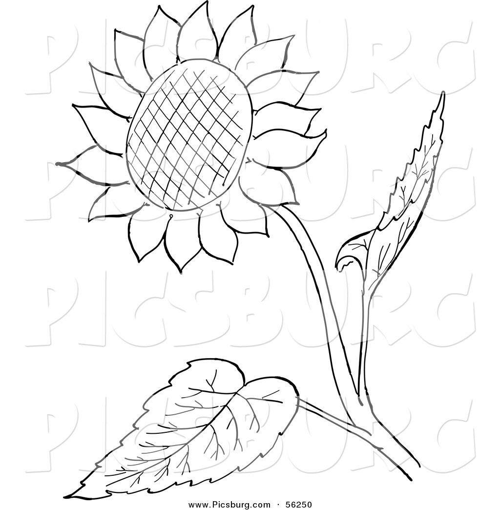 Sunflower Cartoon Drawing At Getdrawings Free For Personal Use