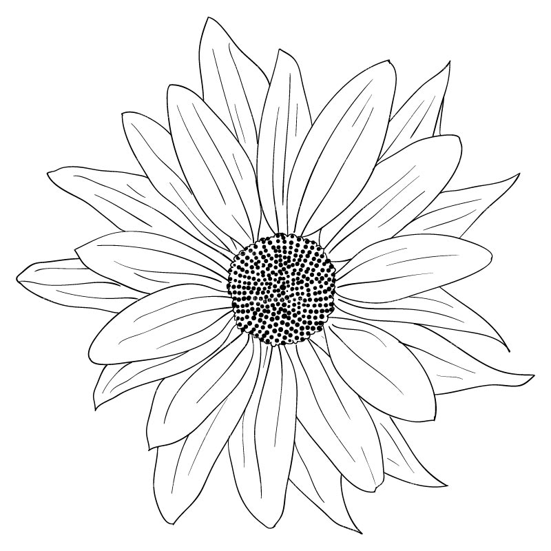 Sunflower Drawing Black And White at GetDrawings | Free ...