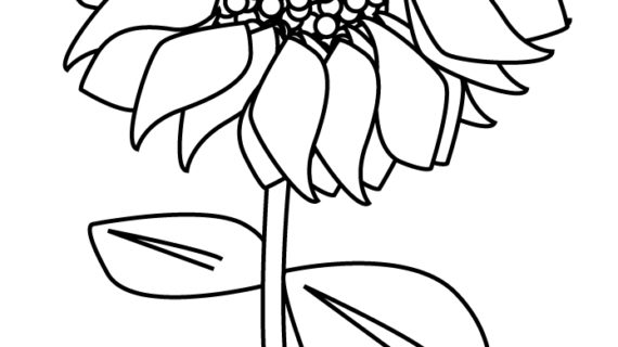 570x320 Outline Drawing Of A Sunflower Best Sunflower Drawing Black