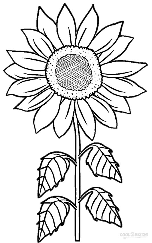 534x850 Printable Sunflower Coloring Pages For Kids Cool2bkids