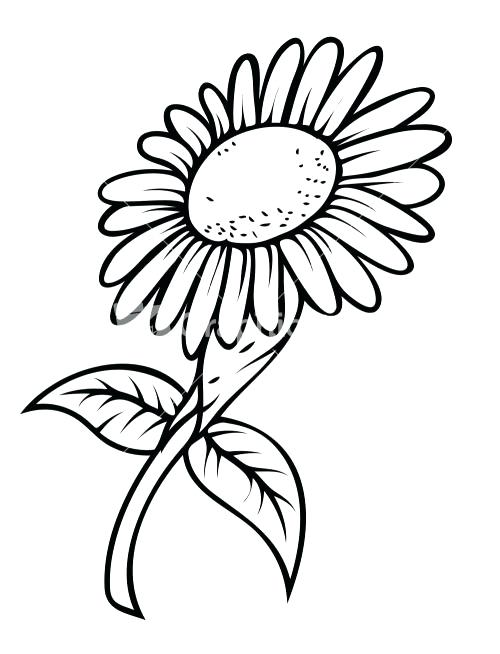 500x654 Sunflower Clipart Black And White Sunflower Free Sunflower Clipart