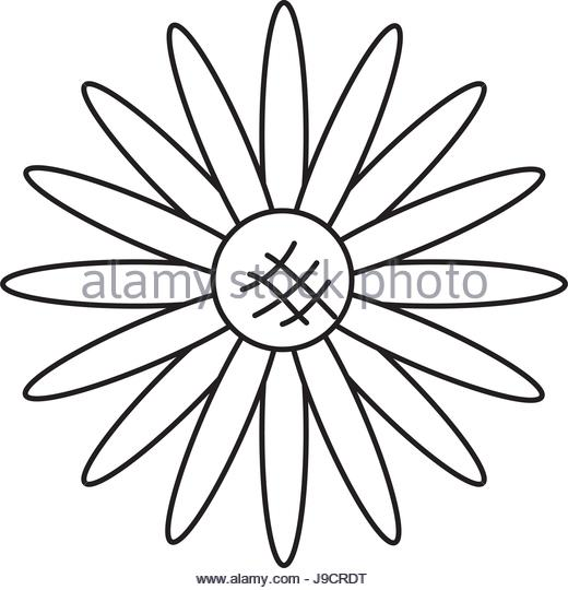 520x540 Sunflower Vector Black And White Stock Photos Amp Images