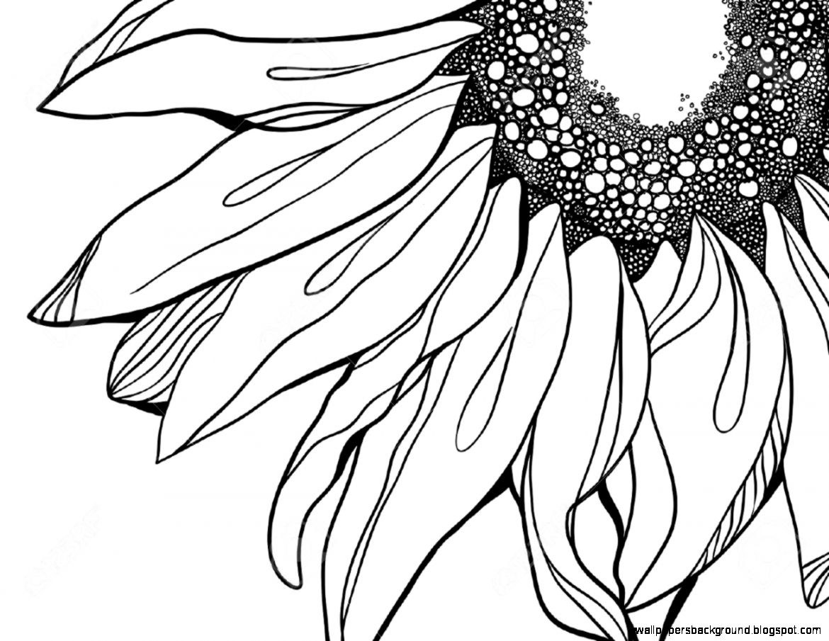 1170x905 Black And White Sunflower Drawing Wallpapers Background
