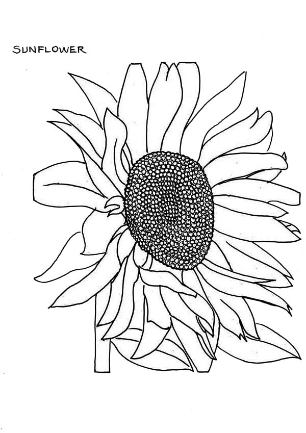 600x849 Fading Sunflower Coloring Page