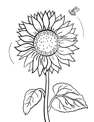 392x507 Perfect Sunny The Sunflower Coloring Page Print Pages Color Bros