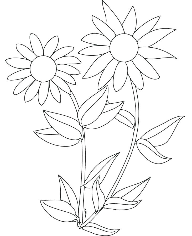 731x902 Picture Of A Sunflower To Color Sunflower Pictures To Color
