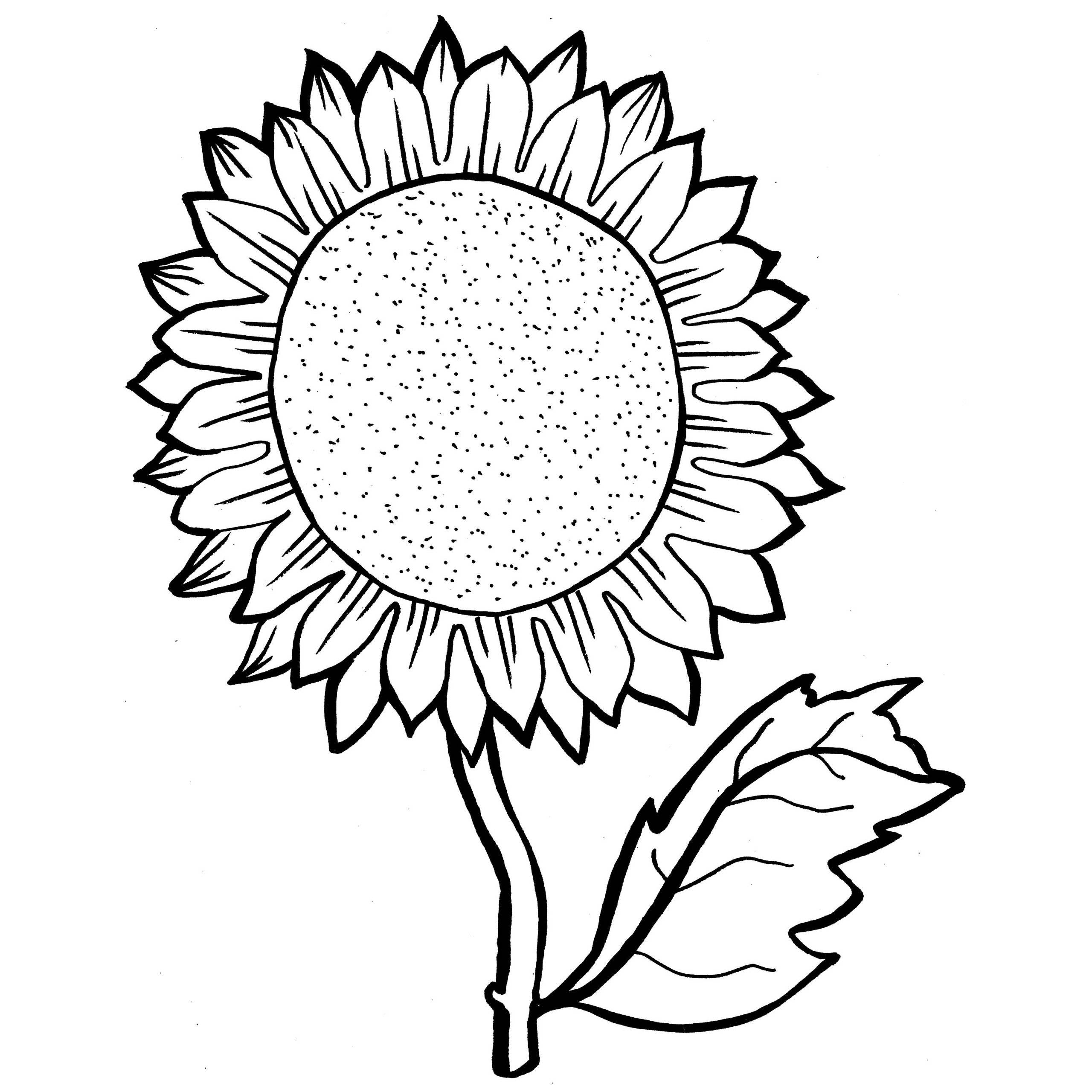 coloring pages of realistic sunflowers | Sunflower Drawing Color at GetDrawings.com | Free for ...