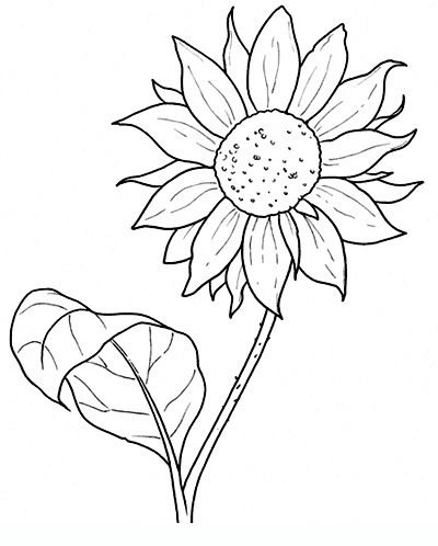 400x498 Sunflower Drawings Of Flowers For Teens And Adults Printable