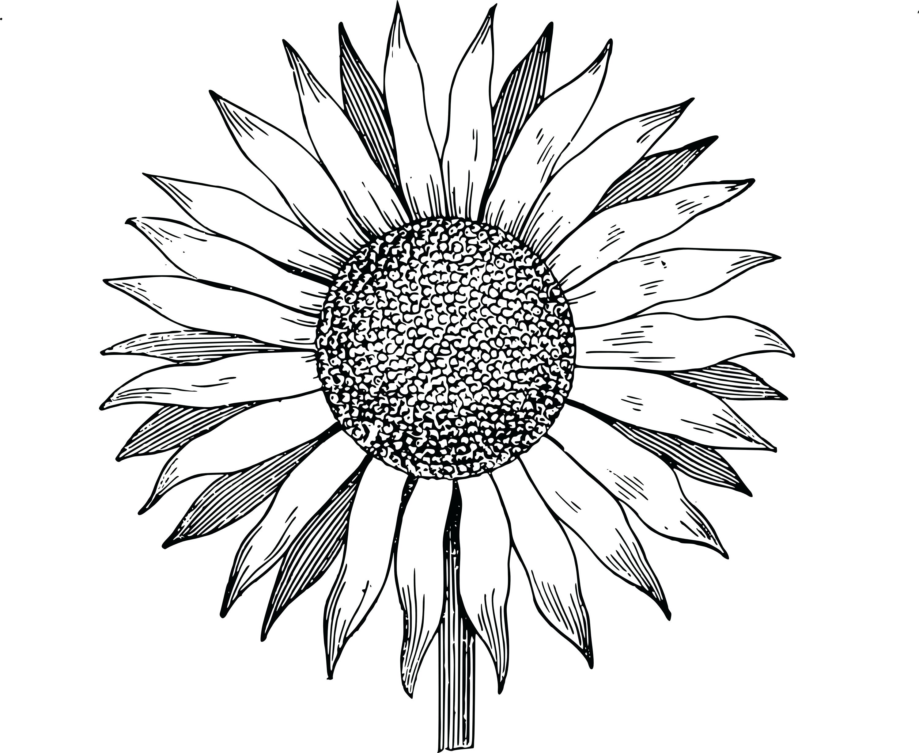 3000x2457 Sunflower Garden Coloring Page Pages Thanksgiving Dinner Adults