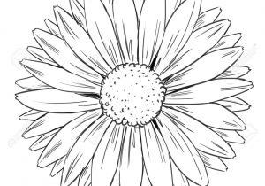 300x210 Sunflower Outline Drawing