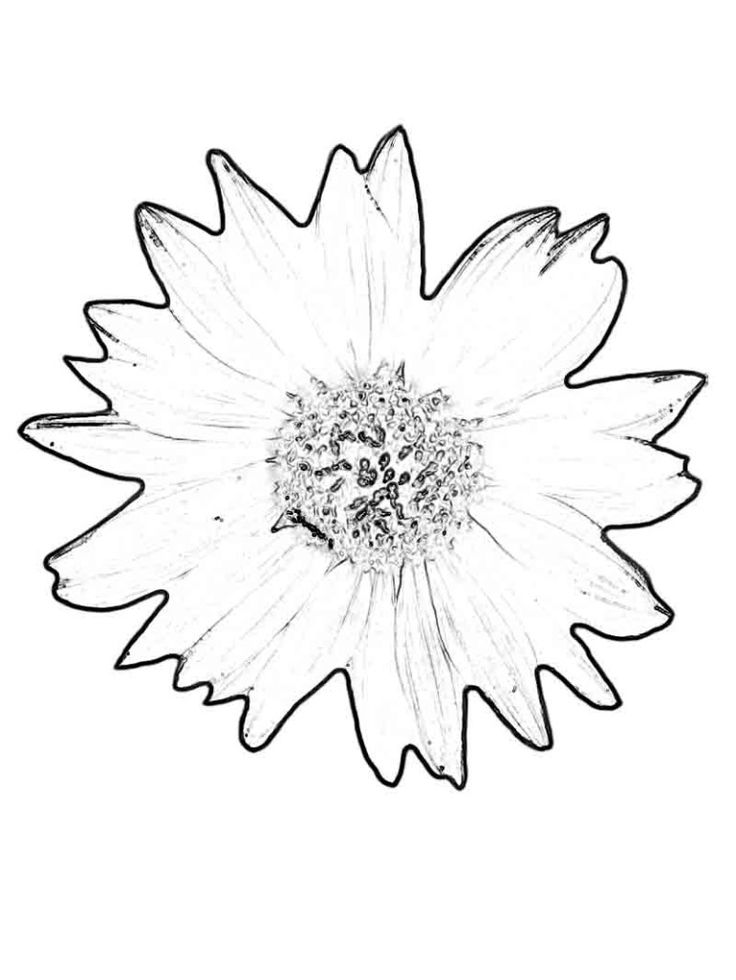 736x980 85 Best Sunflower Coloring Page Van Gogh Images