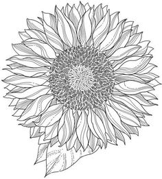 236x261 Best Sunflower Drawing Black And White On Uncategorized