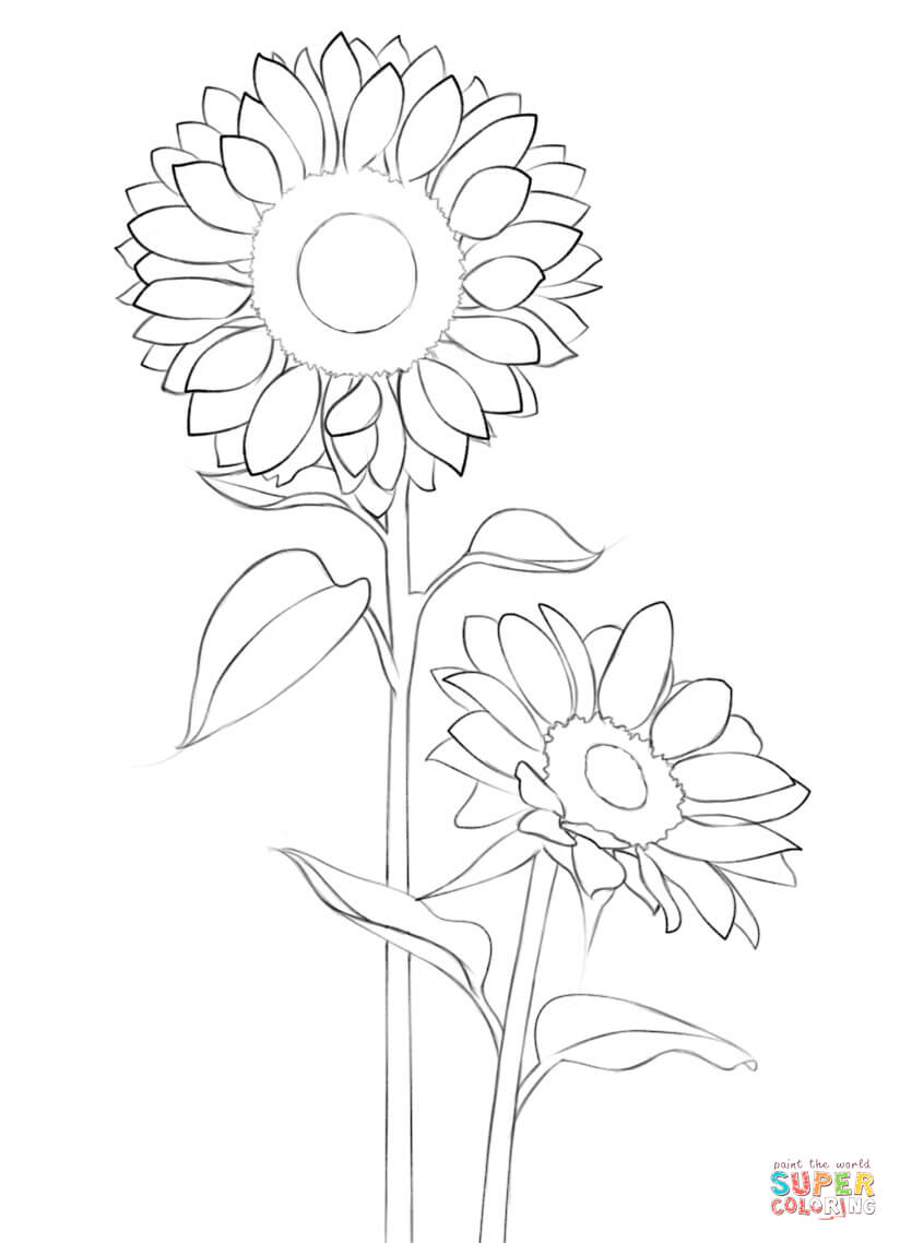 Sunflower Drawing Easy at GetDrawings.com | Free for personal use ...