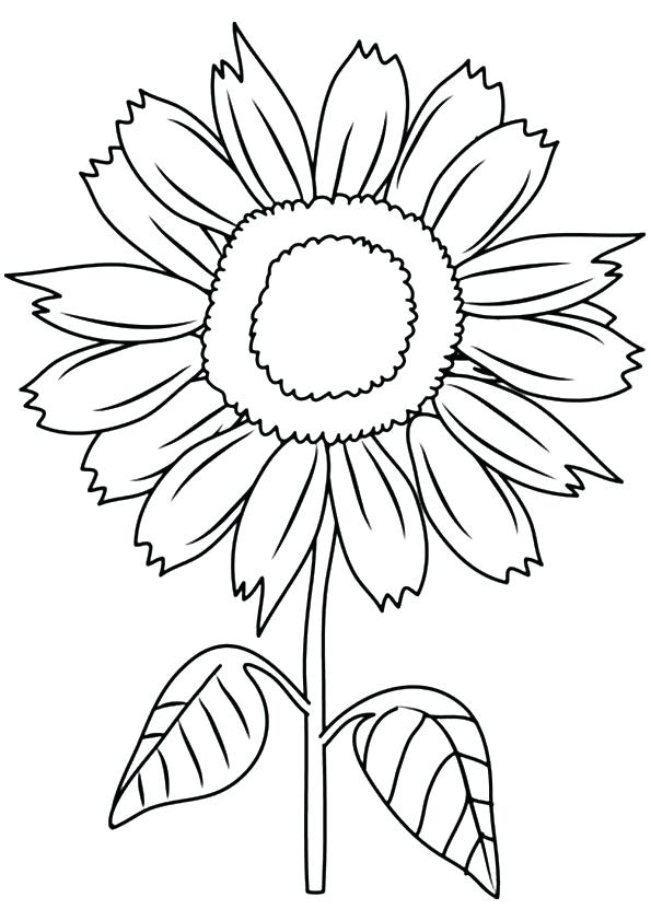 Sunflower Drawing For Kids at GetDrawings.com   Free for personal ...