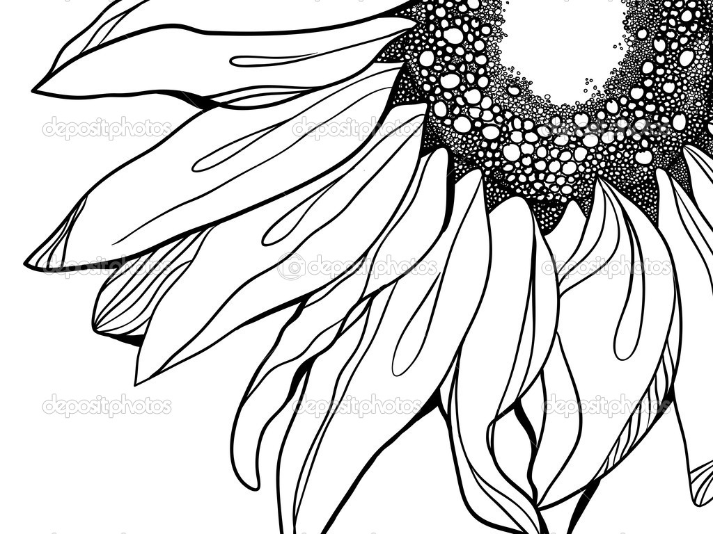 1024x768 Sunflower Vector Illustration Stock Illustration Vasileva