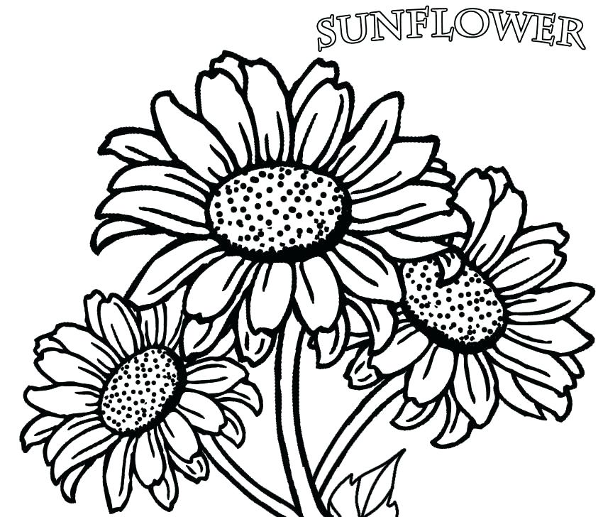 850x728 entertaining free flower coloring pages crayola photo realistic
