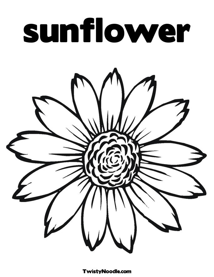 600x782 sunflower amazing coloring page 685x886 sunflower clipart simple