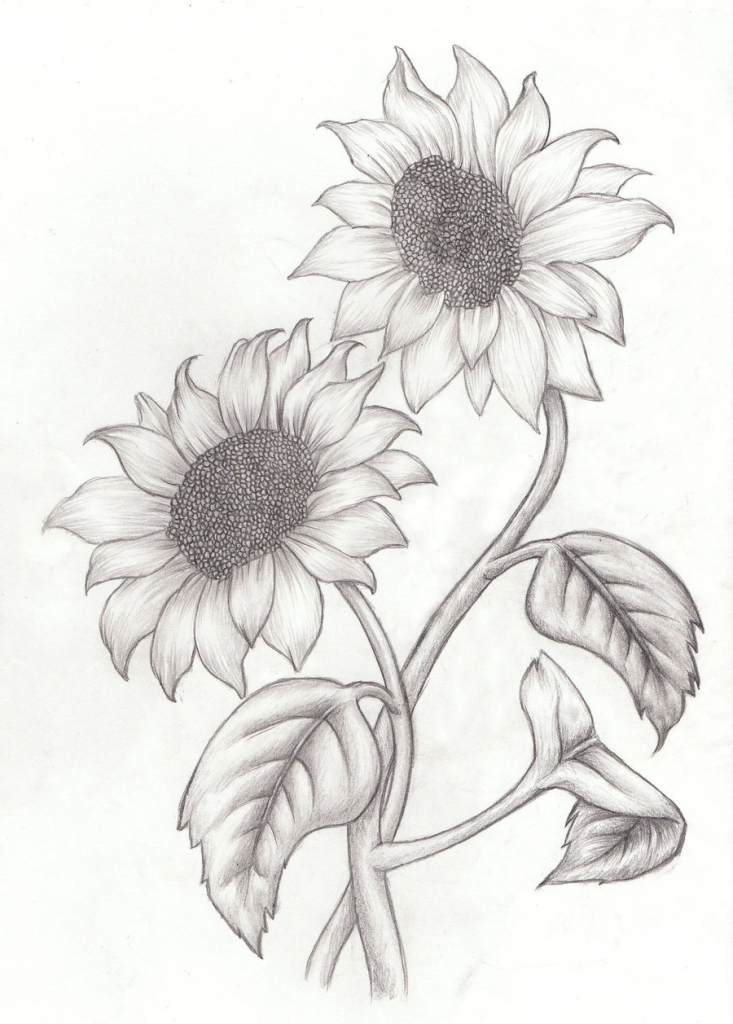 sunflower drawing simple at getdrawings com free for personal use