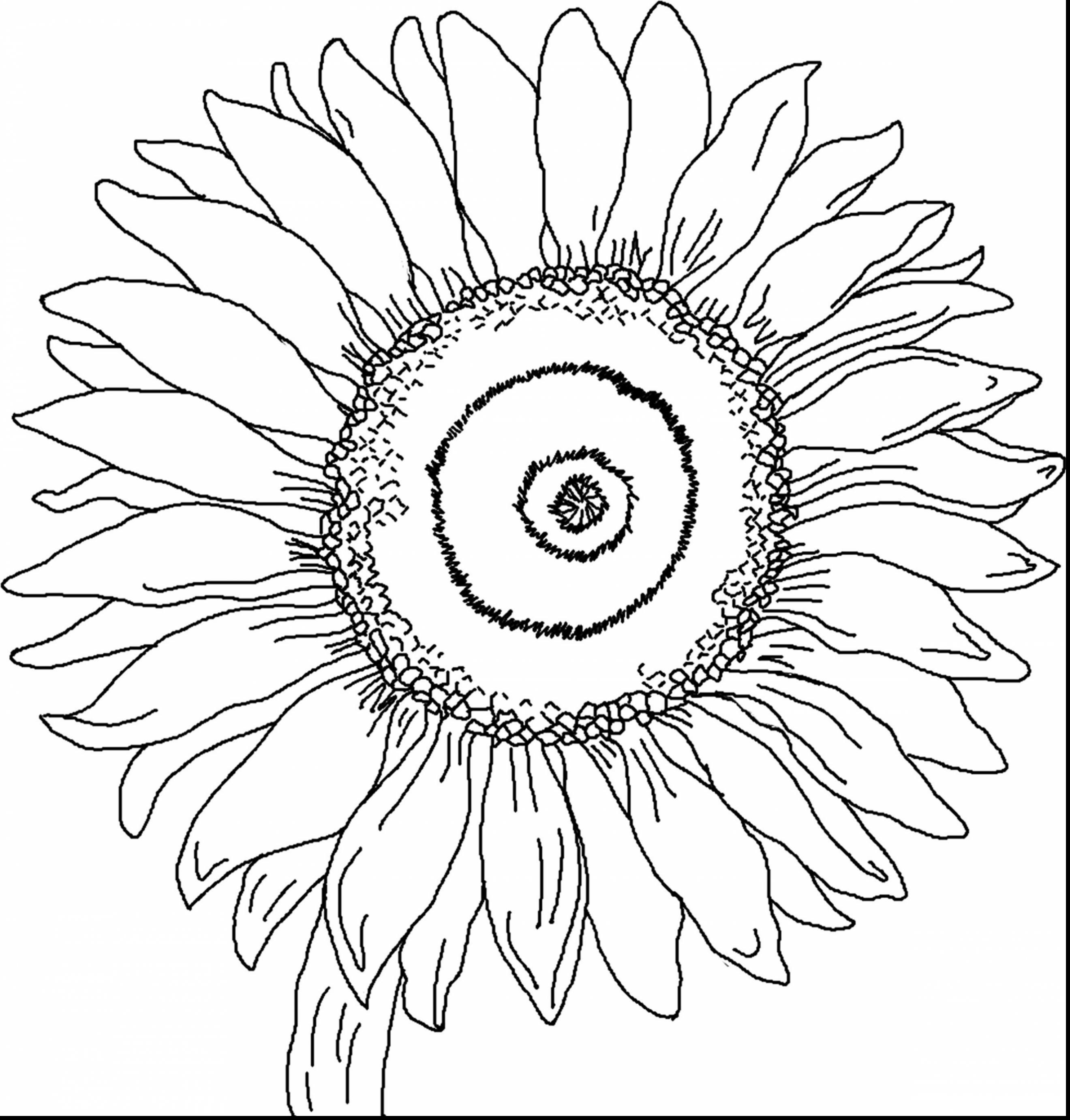 Sunflower Drawing Template at GetDrawings.com   Free for personal ...