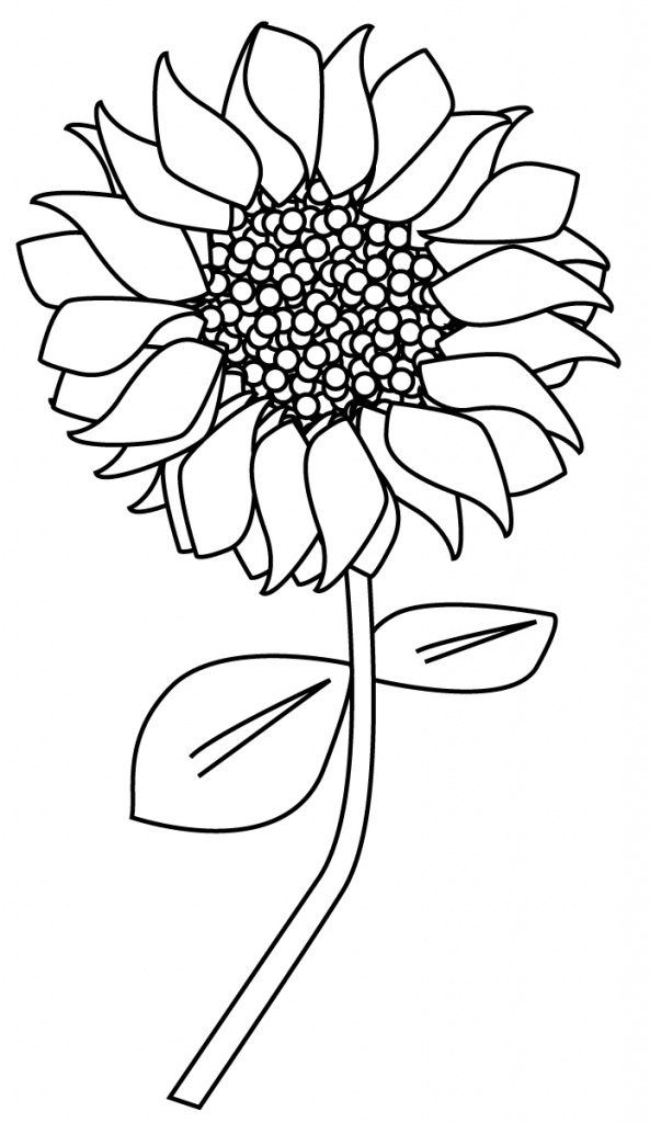 593x1024 Sunflower Drawing Simple