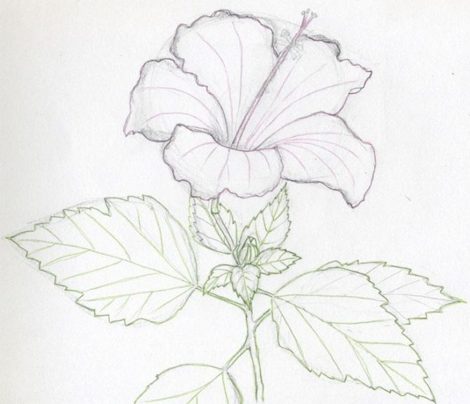 671x577 Coloring Pages Easy Flowers To Sketch Easy Flowers To Sketch