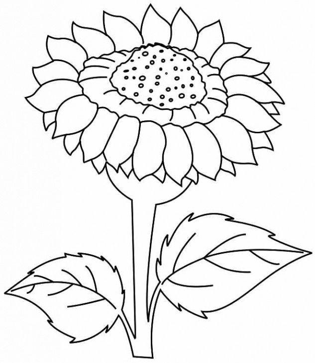 Sunflower Line Drawing